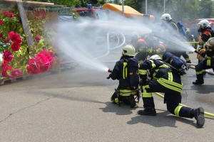 Watering a rose garden with a fire hose